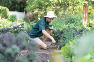Staff in Edible Garden