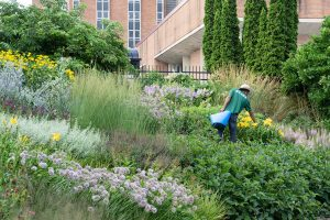 Intern in New American Garden