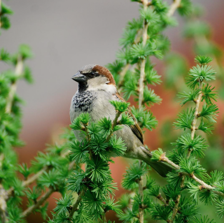 Bird in the Larch