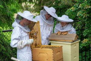 Three Bee Keepers