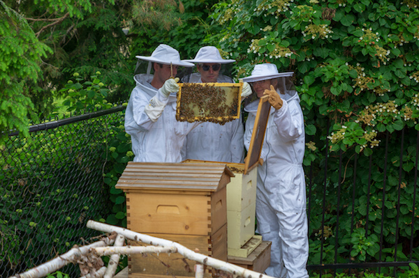 Bee Keepers in Action