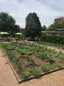 Full view of Kitchen Garden