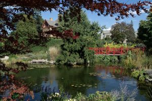 A Serene view of the Pond